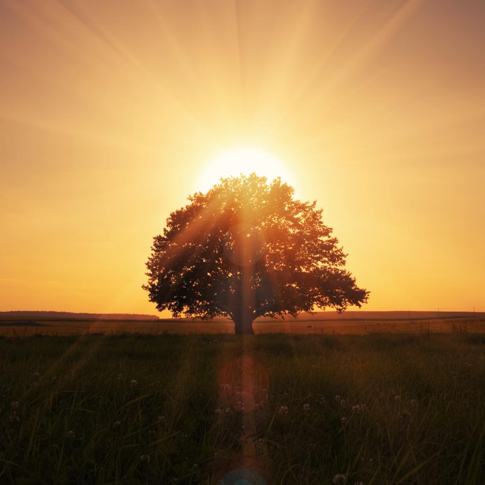 passaggiadarte-missione-albero-primosole